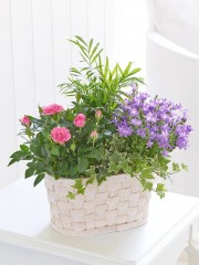 Rose and Kalanchoe Planted Basket