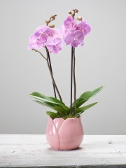 Mother's Day Orchid