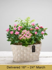 Mother's Day Pink Planted Basket